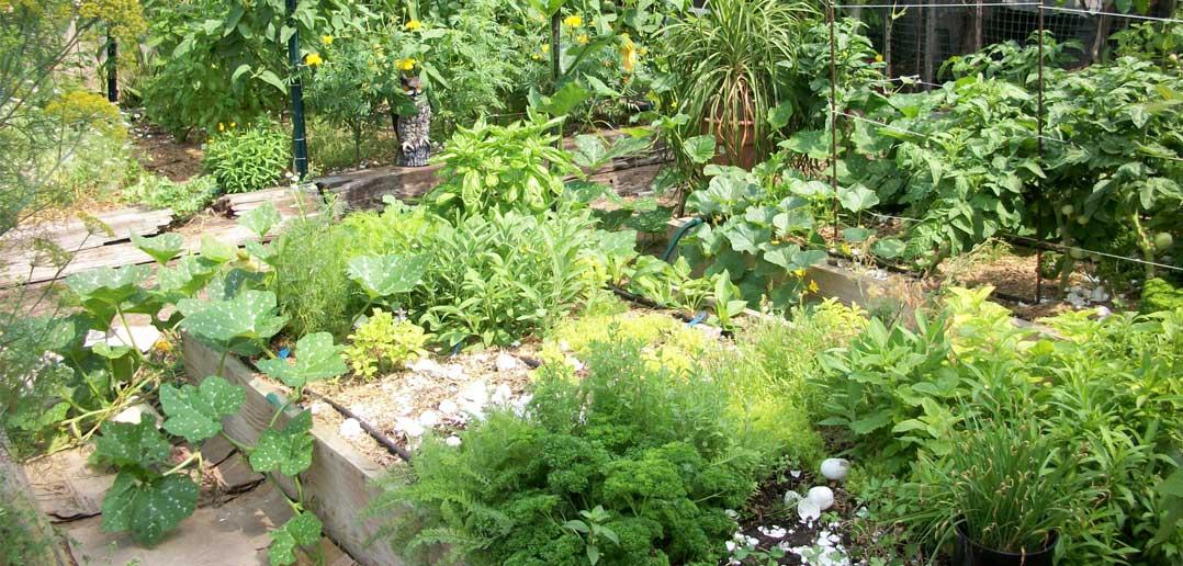 A to Z Outdoor Design Guide: Herb Garden