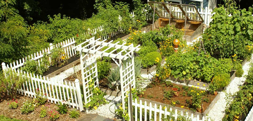 A to Z Outdoor Design Guide: Vegetable Patch - Movato Home